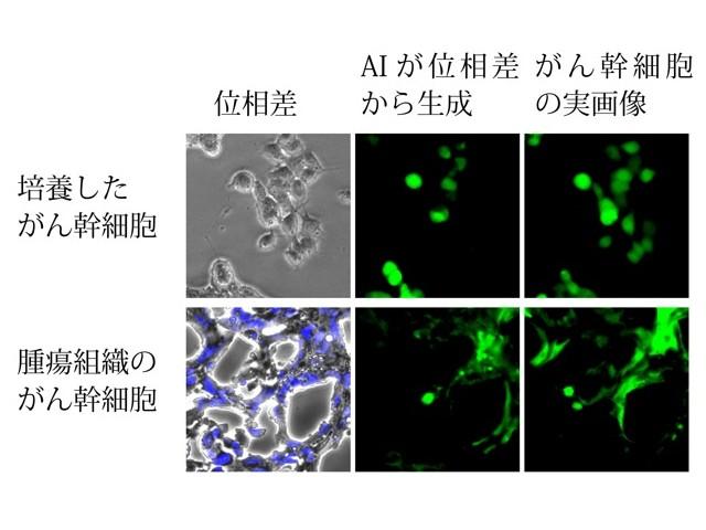 東京工科大,がん幹細胞を見分けるAI開発   OPTRONICS ONLINE ...