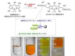 東薬大,水に溶けない有機蛍光色素を水溶化