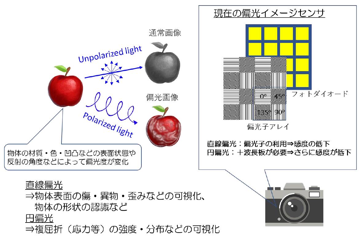 図1 偏光の検出から得られる情報と現在の偏光イメージセンサ