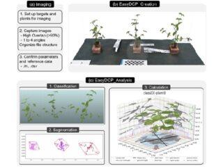 東大,デジカメだけで植物を3次元データ化