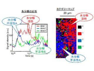 中大ら,光触媒水分解の電荷輸送過程を可視化