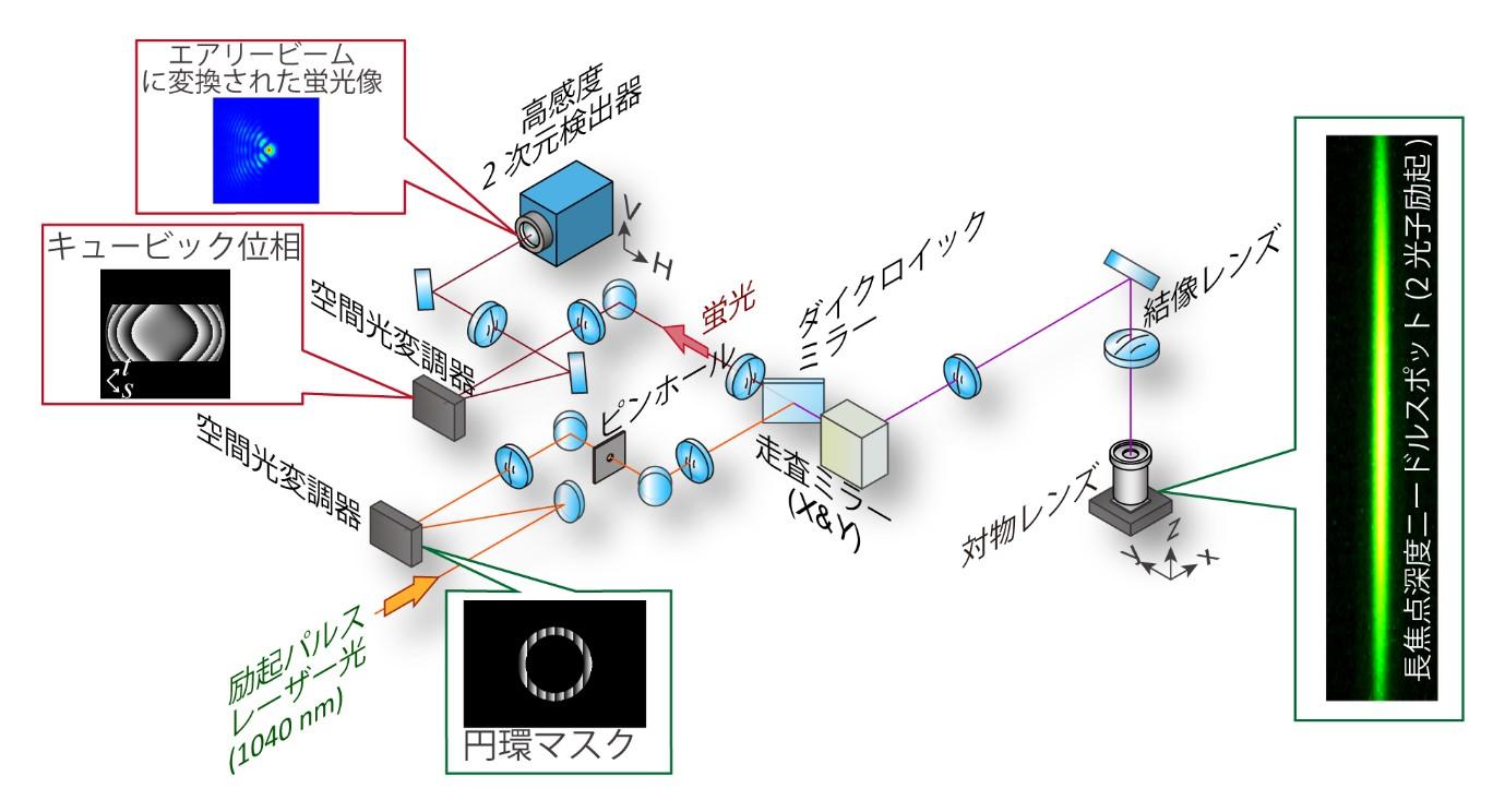 図2  エアリービーム変換光学系を導入したニードル走査型の2光子励起レーザー顕微鏡システム