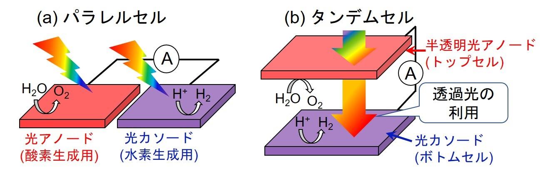 図1 (a)光アノードと光カソードを隣接して配置するパラレルセル,及び(b)上下に重ねた構成とするタンデムセルを用いた光電気化学的な水の全分解反応の模式図。