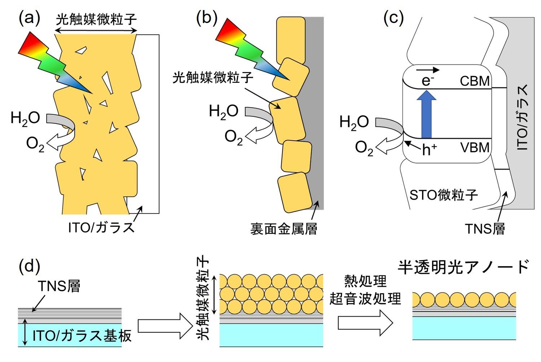 図2 (a)スクリーンプリントや電気泳動堆積法によってITO/ガラス基板上に光触媒粉末を直接堆積させた光電極,(b)粒子転写法によって作製された粉末光電極,及び(c)TNS層上にSTO微粒子が堆積した半透明光アノードの模式図。(d)半透明STO/TNS/ITO光アノードの作製工程の模式図。