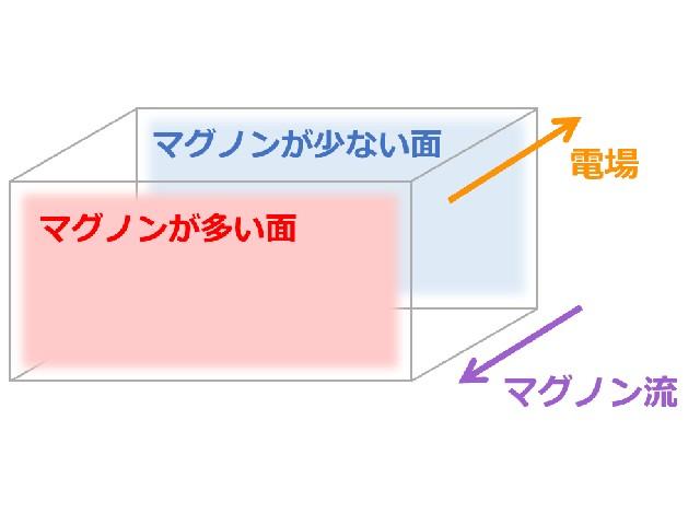 東大,マグノンの特殊な状態が現れるモデルを提案