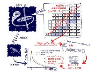 東大ら,X線バースト天体の不安定Mg燃焼を解明
