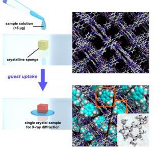 東大、結晶スポンジ法による極小量化合物のX線結晶構造解析
