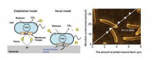 東大、生きた微生物が電気エネルギーを作り出す仕組みを解明