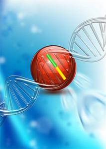 理研、PCR反応の増幅エラーを抑制