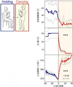 理研、抱っこして歩くと赤ちゃんがリラックスする仕組みの一端を解明