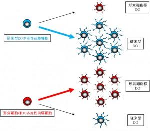 東京医歯大、免疫の司令塔、樹状細胞の源となる細胞を発見