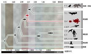 理研、カメ類2種のゲノム解読