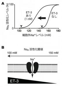 基礎生物学研究所,体液Na濃度センサーの調節機構を解明