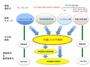東京医歯大、複数の神経変性疾患にまたがる共通病態(シグナル)を解明