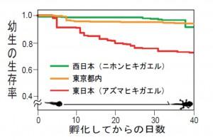東大、DNA研究により東京のヒキガエル、西日本型へ遺伝子浸透が進んでいることを実証