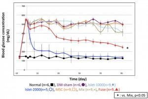 京大、膵島細胞と間葉系幹細胞の融合細胞を用いた糖尿病治療実験に成功