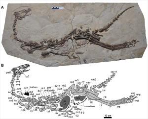 北大,植物食性進化を解くカギとなる恐竜を発見