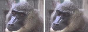 京大ら,霊長類のまばたきがコミュニケーションツールである可能性を発見
