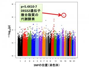 阪大ら,統合失調症患者の認知機能障害に関する遺伝子を発見