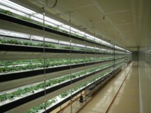 日清紡ホールディングス,植物工場で生産したいちごを関東・東海に今秋から出荷