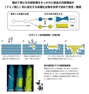 北大、結晶中の分子の《ドミノ倒し》を世界で初めて観測