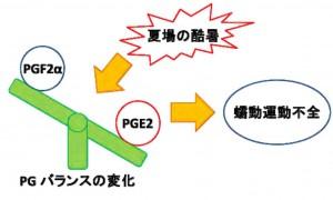 岡山大、夏場の酷暑がウシ卵管分泌機能に悪影響を及ぼすことを発見