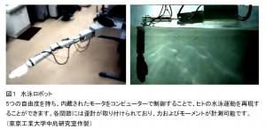 筑波大と東工大、水泳におけるヒトの推進メカニズムを水泳ロボットを用いて多角的に 解明
