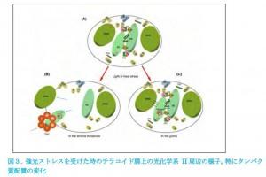 岡山大、強光ストレス下での光合成光化学反応制御の新機構を発見
