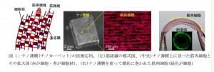 東北大、細胞のための極薄カーペットを開発