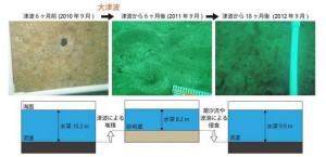 東大,大津波が海底生態系に及ぼした影響を潜水調査で解明