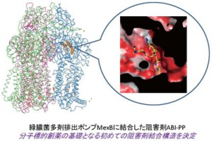 阪大、多剤排出タンパク質の阻害剤結合構造決定に初めて成功