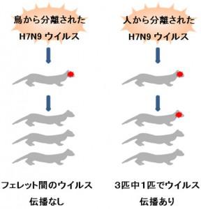 東大など、H7N9鳥インフルエンザウイルスの特性を解明