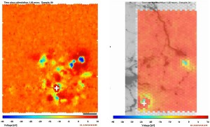 東大他、脳内の神経信号の伝播速度を可視化