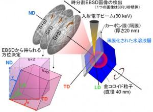 東大ほか、3次元ピコメートル精度でナノ粒子の水中動画観察に成功