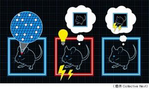 理研、誤りの記憶を形成できることを、光と遺伝子操作を使って証明
