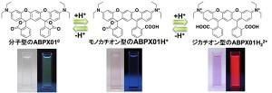 理研と岡山大、金属イオンの濃度に応答して色調が変わるケミカルセンサを開発