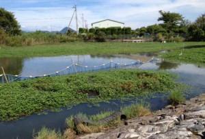 立命館大学と守山市が共同で「琵琶湖の水草堆肥化事業」をスタート