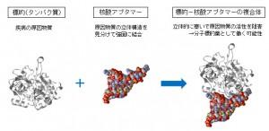 群馬大ほか、架橋型核酸アプタマーの作製法を確立