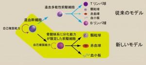 東大、従来の学説を覆す血液細胞の分化モデルを発見