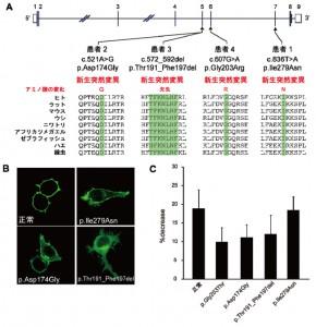 横浜市大、小児の難治性てんかんの原因遺伝子を発見