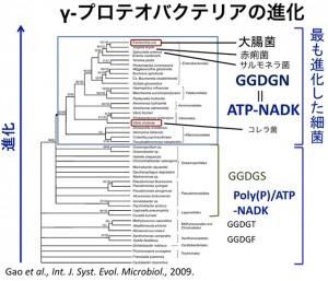 京大、酵素のATP特異性の獲得メカニズムを解明