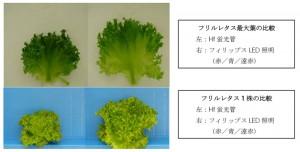 シーシーエスと玉川大,LED照明を用いて植物の成長の効率を高める栽培法を確立