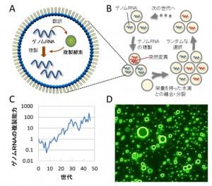阪大、「進化の機能」を持った人工細胞の作成に成功