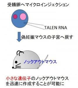 東京医歯大、新しい遺伝子改変技術の応用により小さなRNAの欠損マウスの作成に成功