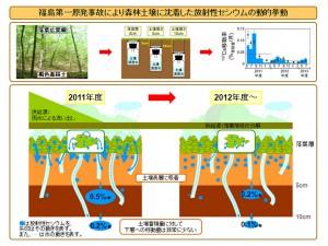 原研、森林土壌に沈着した放射性セシウムの動的挙動を解明