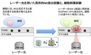 京大、光でガス分子を自在に取り出せる空間材料を開発