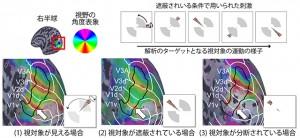 京大、モノの背後を見る脳の仕組みを解明