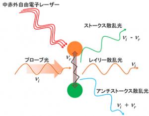 京大,原子の振動を光で自在に操作することに成功