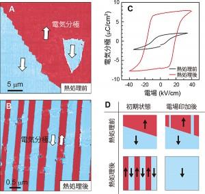 理研、常温有機強誘電体の分極反転を阻害する要因を発見
