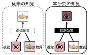 立教大、手に与えられた振動によって視覚情報が阻害されることを発見